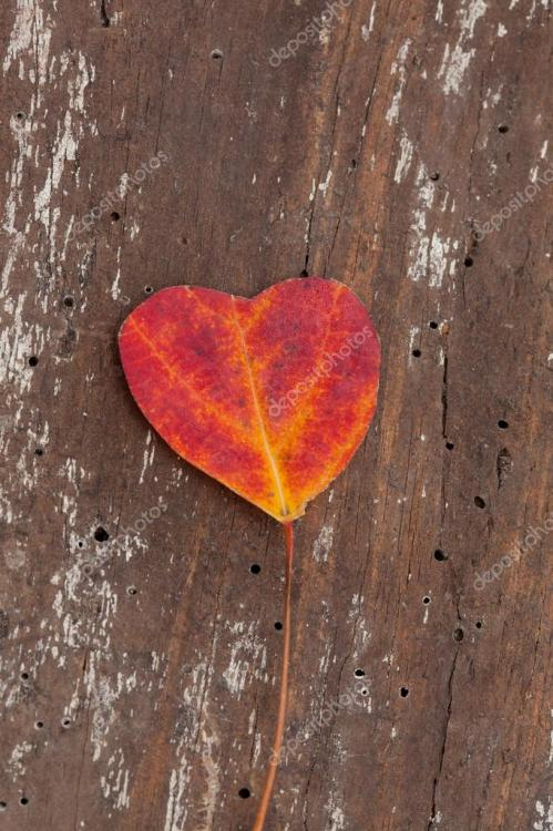 depositphotos_32620543-stock-photo-heart-shaped-autumn-leaf